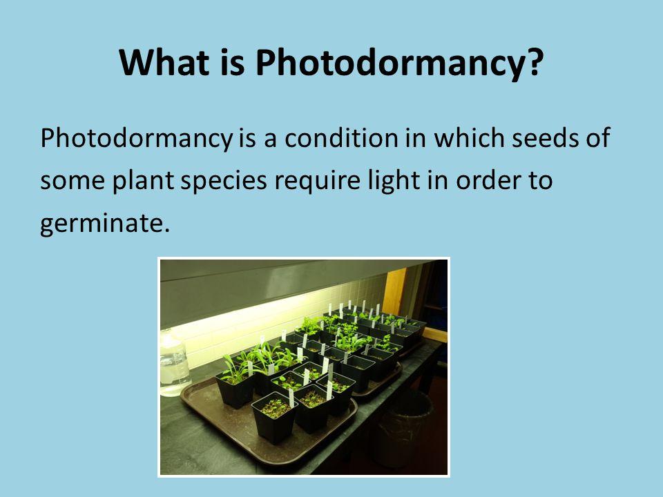 What is Photodormancy.