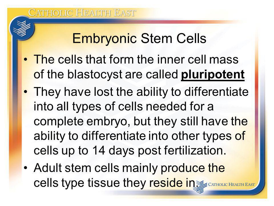 Embryonic Stem Cells The cells that form the inner cell mass of the blastocyst are called pluripotent.
