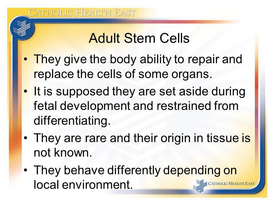 Adult Stem Cells They give the body ability to repair and replace the cells of some organs.
