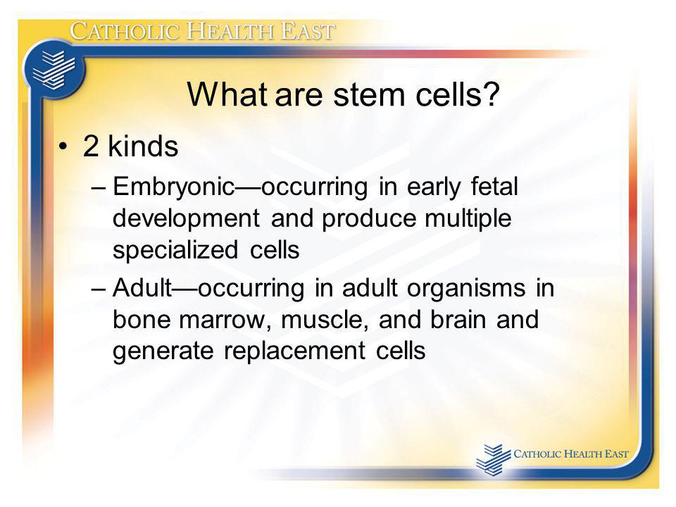 What are stem cells 2 kinds