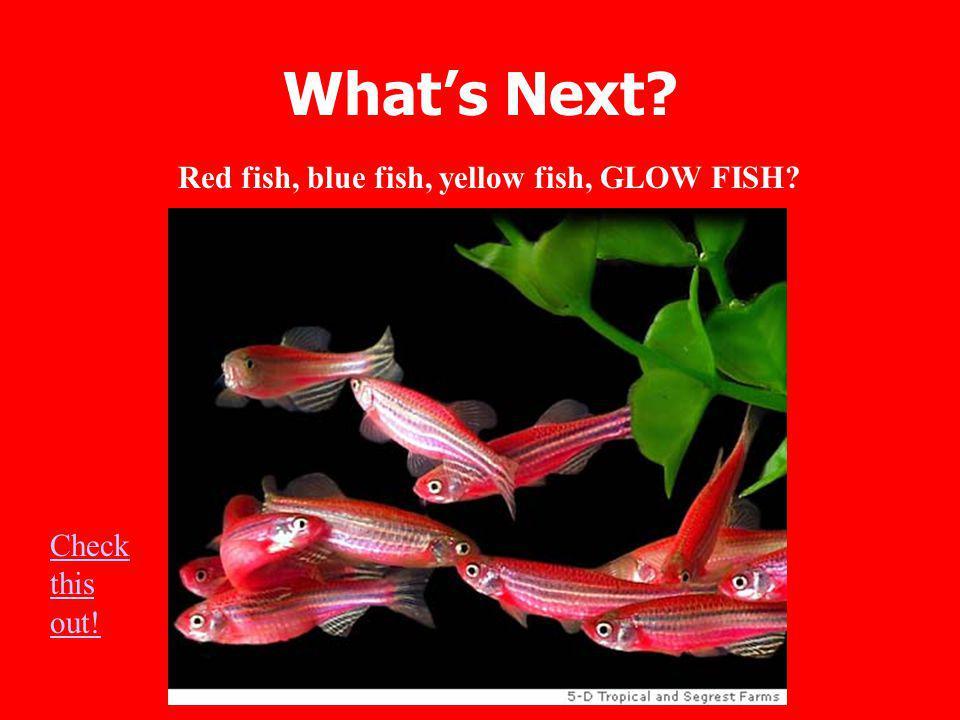 What's Next Red fish, blue fish, yellow fish, GLOW FISH