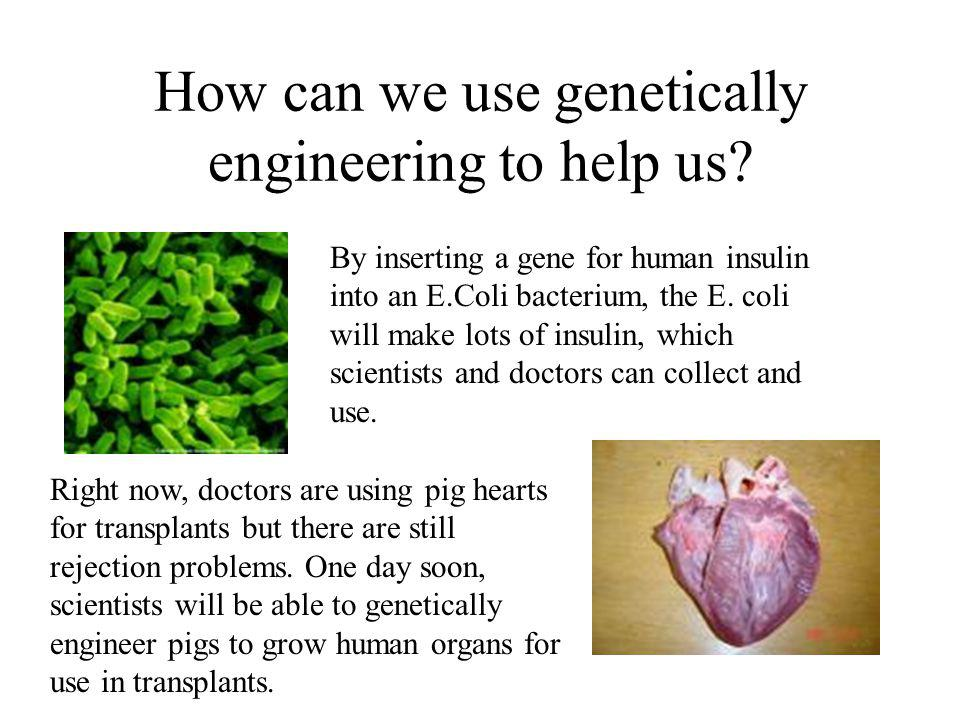 How can we use genetically engineering to help us