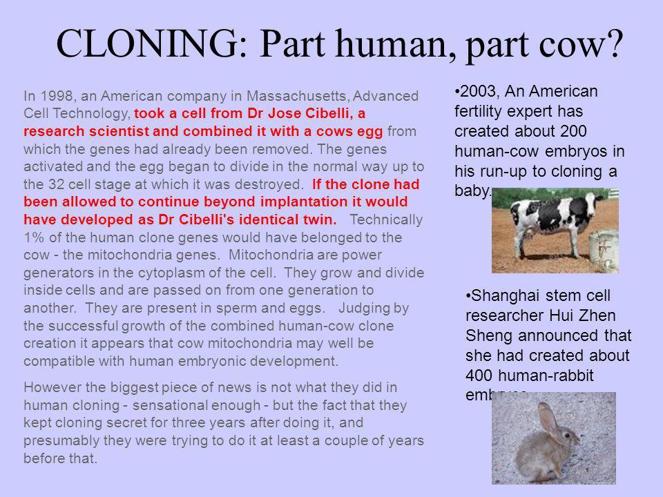 CLONING: Part human, part cow