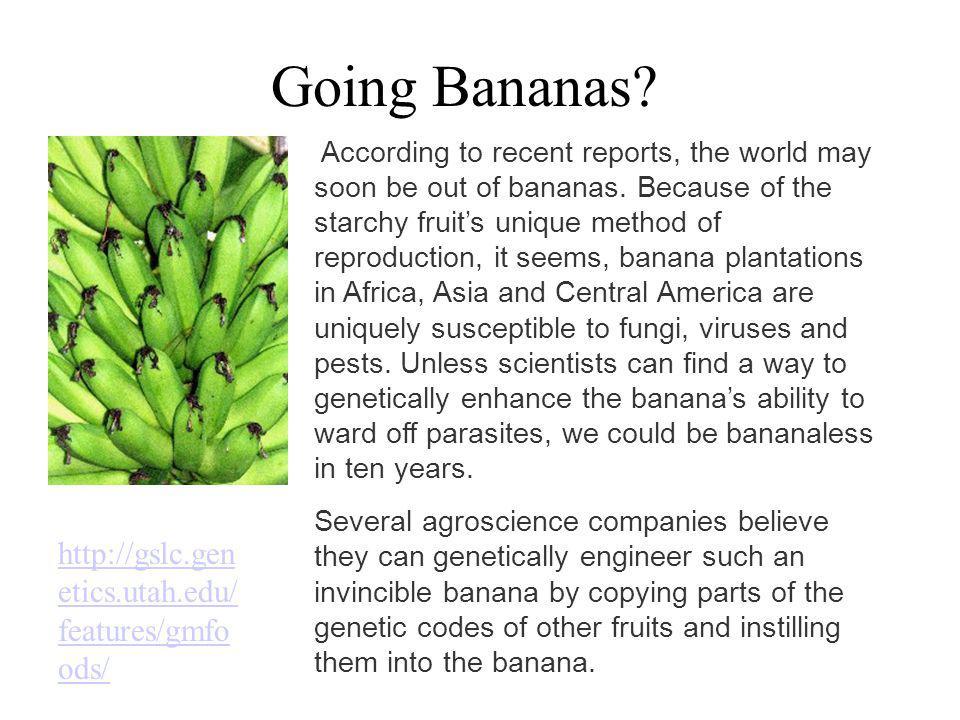 Going Bananas http://gslc.genetics.utah.edu/features/gmfoods/