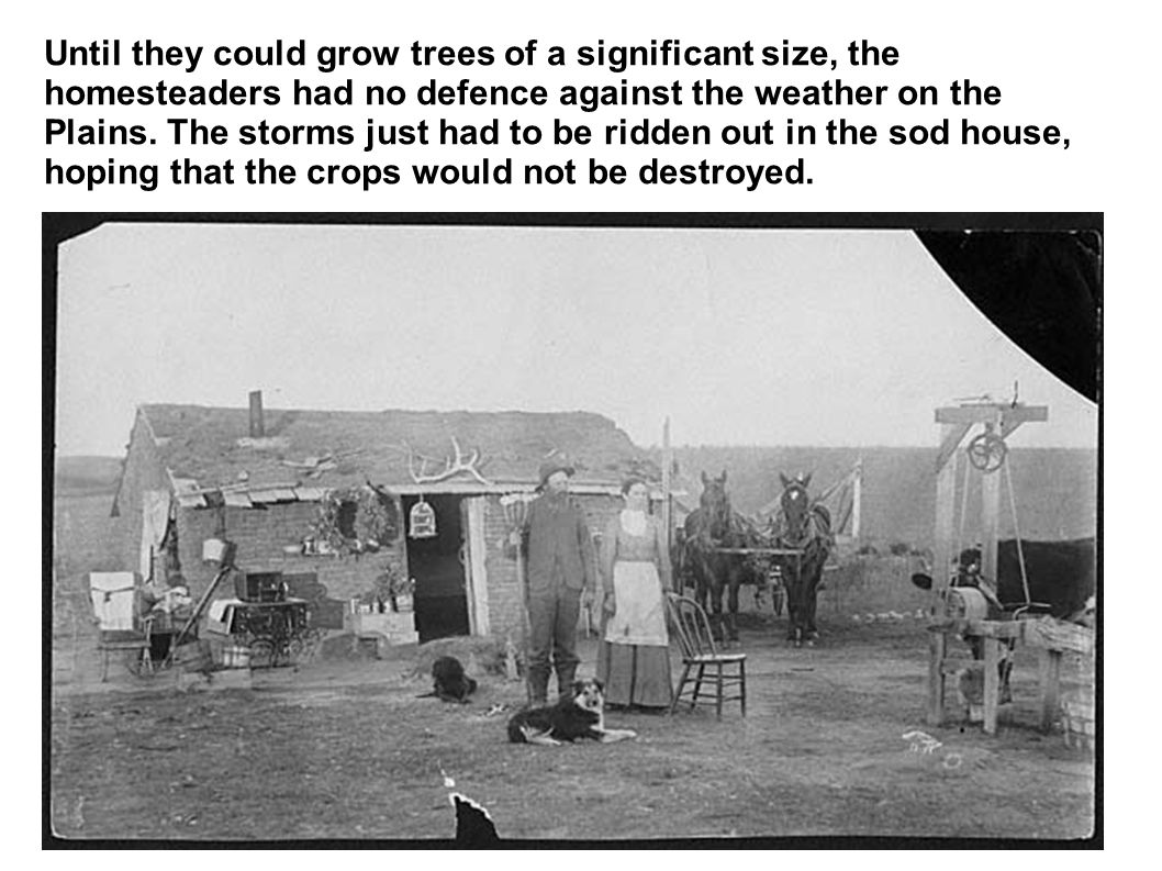 Until they could grow trees of a significant size, the homesteaders had no defence against the weather on the Plains.