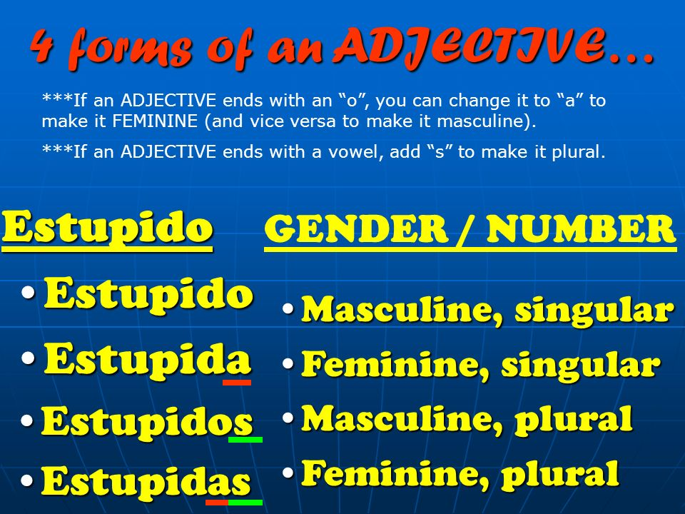 4 forms of an ADJECTIVE… Estupido Estupida Estupidos Estupidas