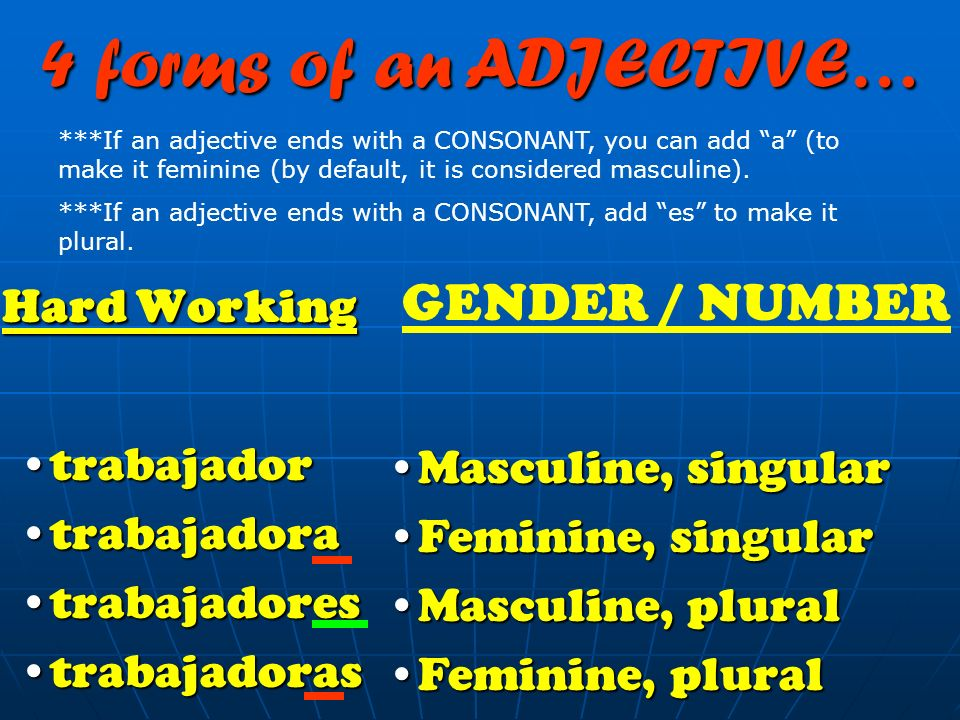 4 forms of an ADJECTIVE… Hard Working GENDER / NUMBER trabajador
