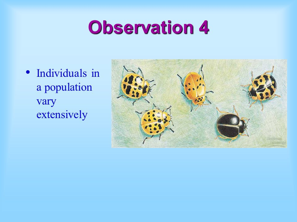 Observation 4 Individuals in a population vary extensively