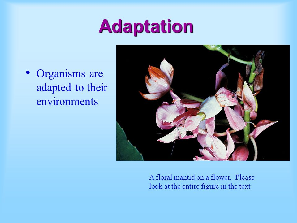 Adaptation Organisms are adapted to their environments