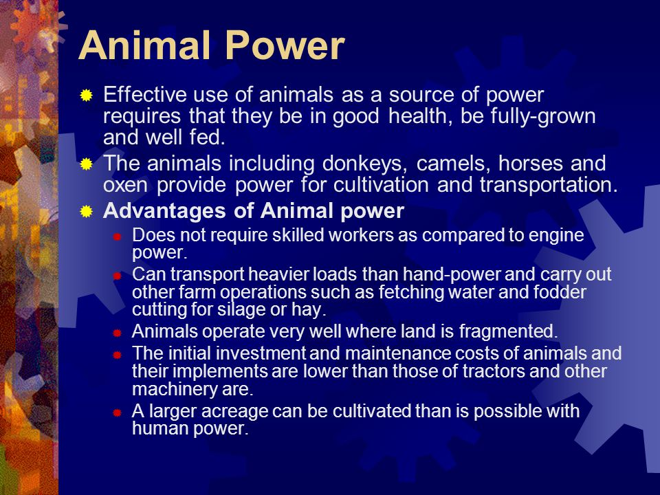 Animal Power Effective use of animals as a source of power requires that they be in good health, be fully-grown and well fed.