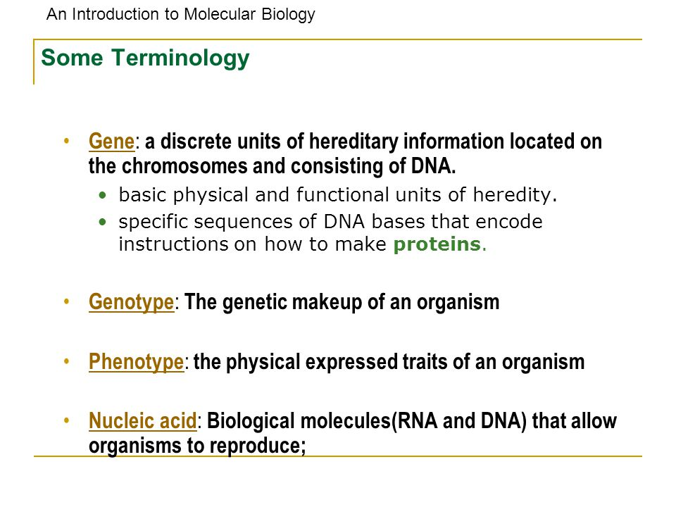 Some Terminology Gene: a discrete units of hereditary information located on the chromosomes and consisting of DNA.