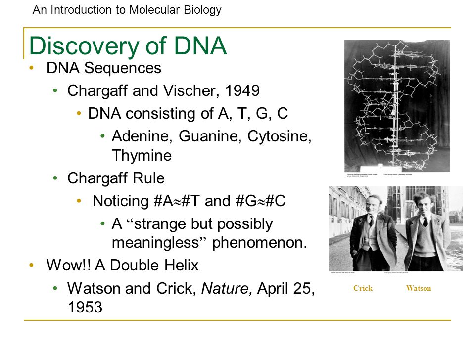 Discovery of DNA DNA Sequences Chargaff and Vischer, 1949