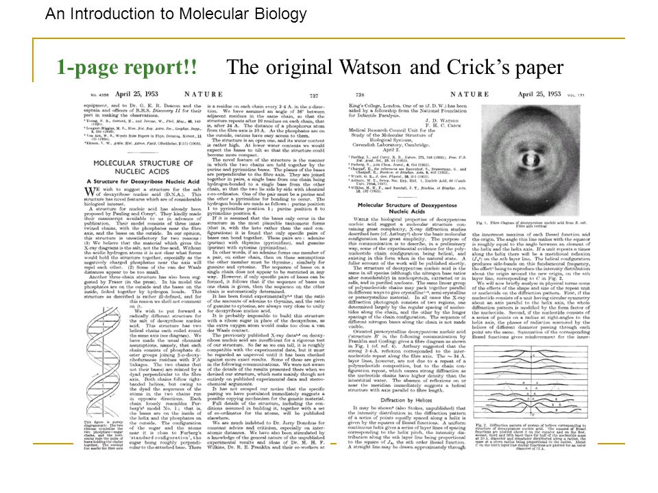watson-crick research paper Watson and crick dna research paper, custom writing assignment, creative writing program canada by on march 27, 2018.