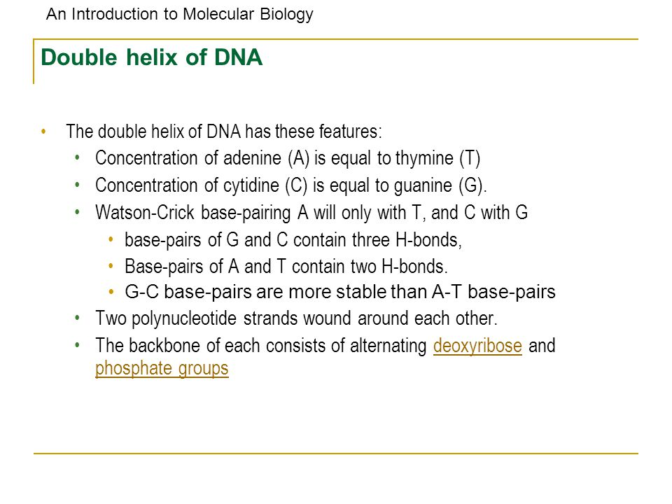 Double helix of DNA The double helix of DNA has these features: Concentration of adenine (A) is equal to thymine (T)