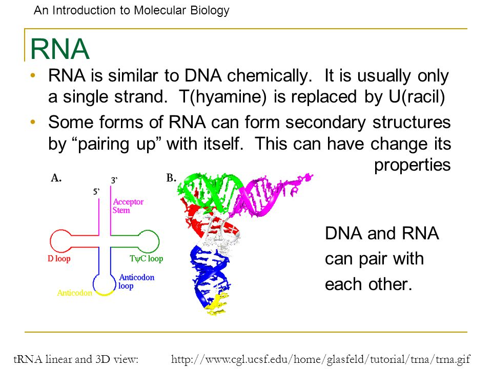 RNA RNA is similar to DNA chemically. It is usually only a single strand. T(hyamine) is replaced by U(racil)