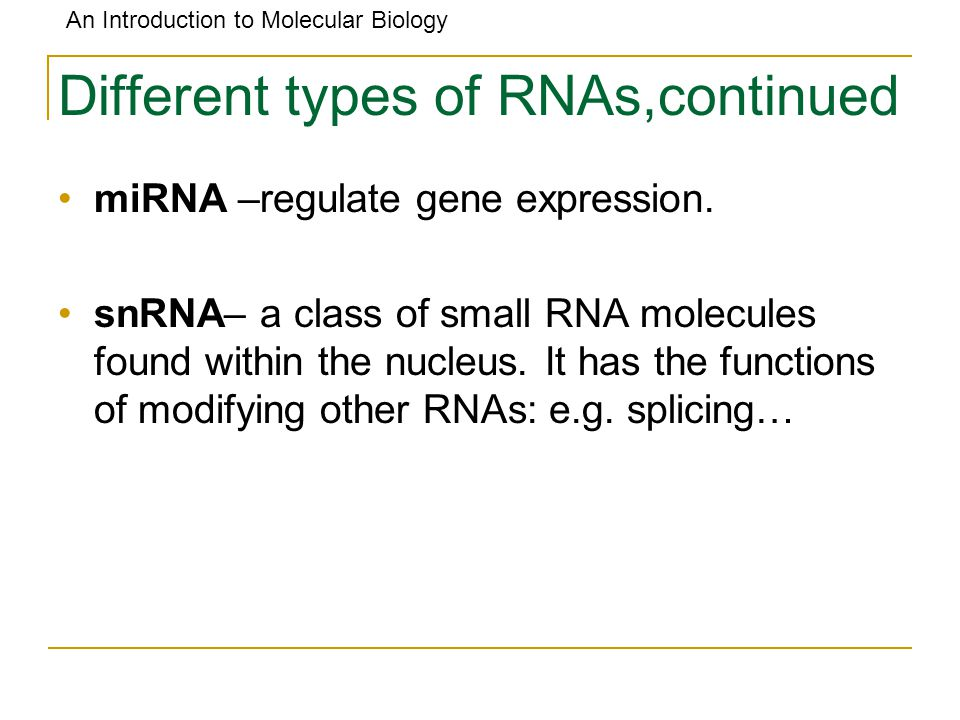 Different types of RNAs,continued