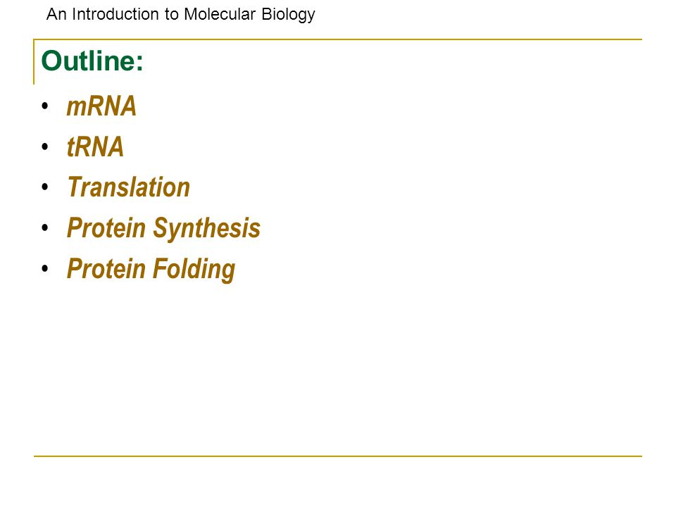 Outline: mRNA tRNA Translation Protein Synthesis Protein Folding