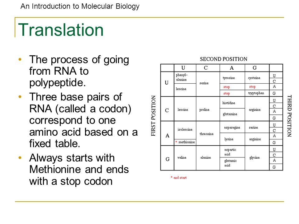 Translation The process of going from RNA to polypeptide.