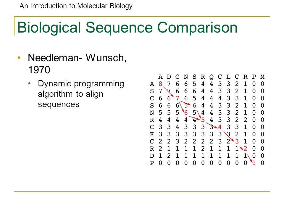 Biological Sequence Comparison