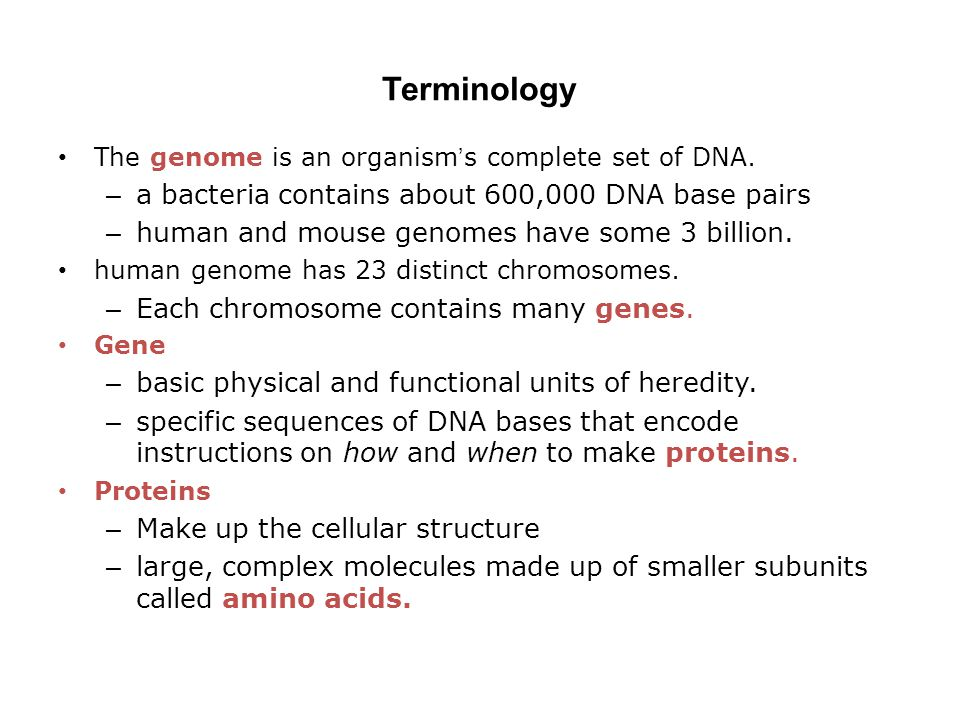 Terminology a bacteria contains about 600,000 DNA base pairs