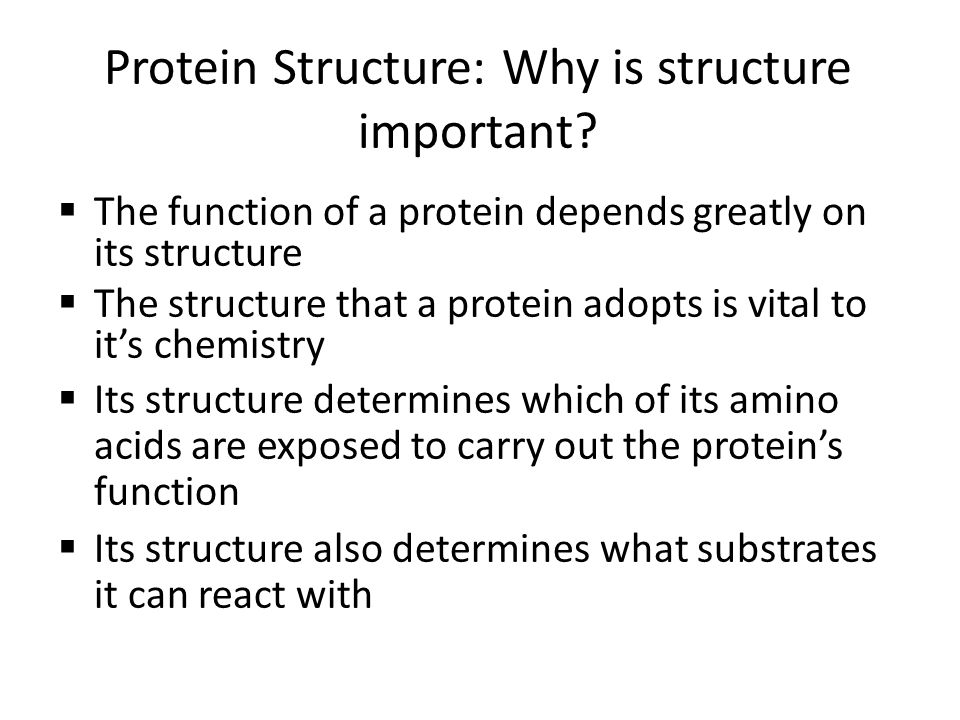 Protein Structure: Why is structure important