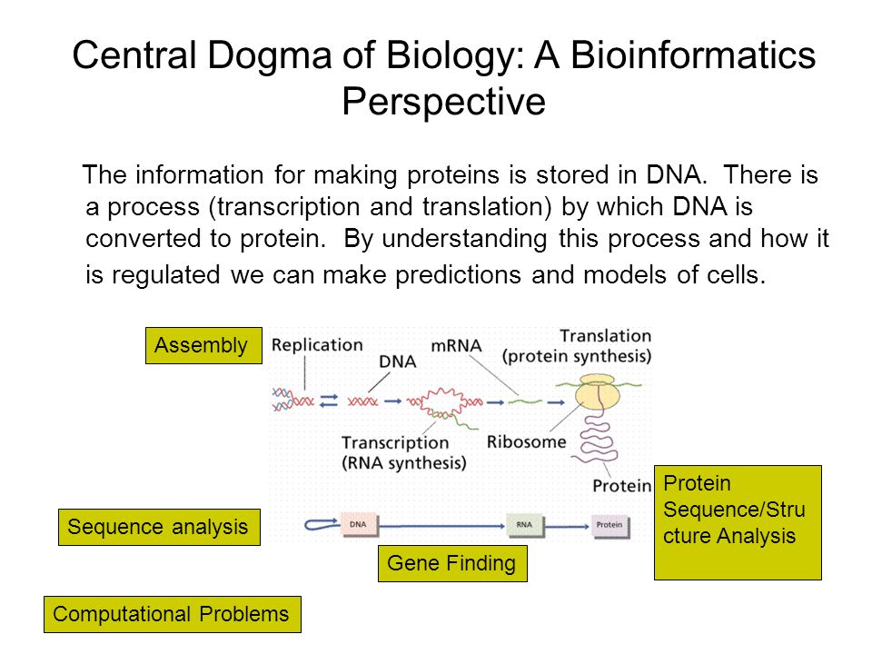 Central Dogma of Biology: A Bioinformatics Perspective