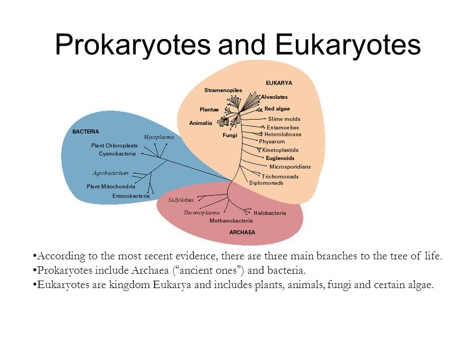 Prokaryotes and Eukaryotes