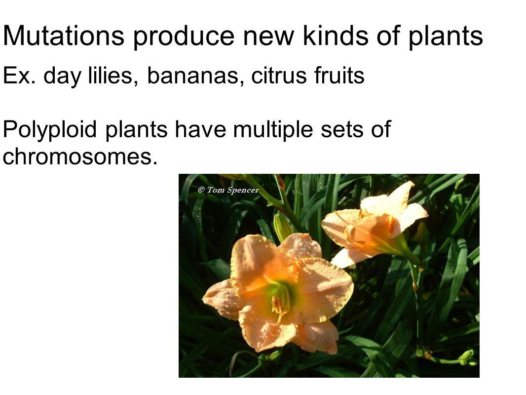 Mutations produce new kinds of plants