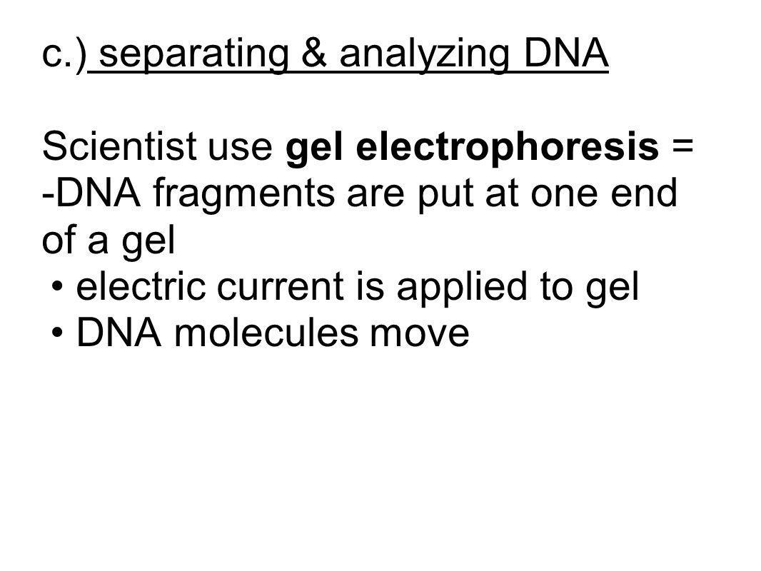 c.) separating & analyzing DNA