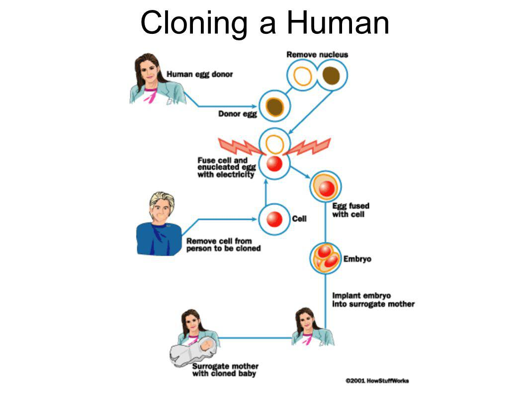 biotechnology human cloning should it The creation of two monkeys brings the science of human cloning closer to reality  but that doesn't mean it will happen, writes science writer.