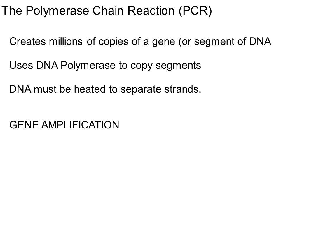 The Polymerase Chain Reaction (PCR)