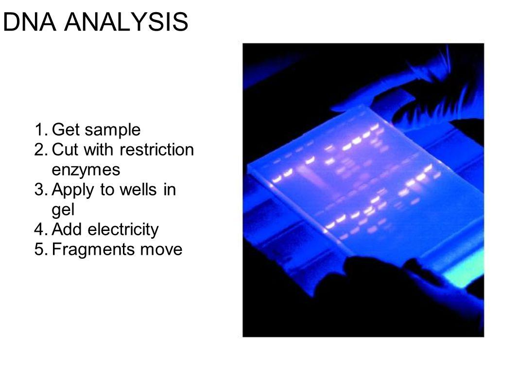 DNA ANALYSIS Get sample Cut with restriction enzymes