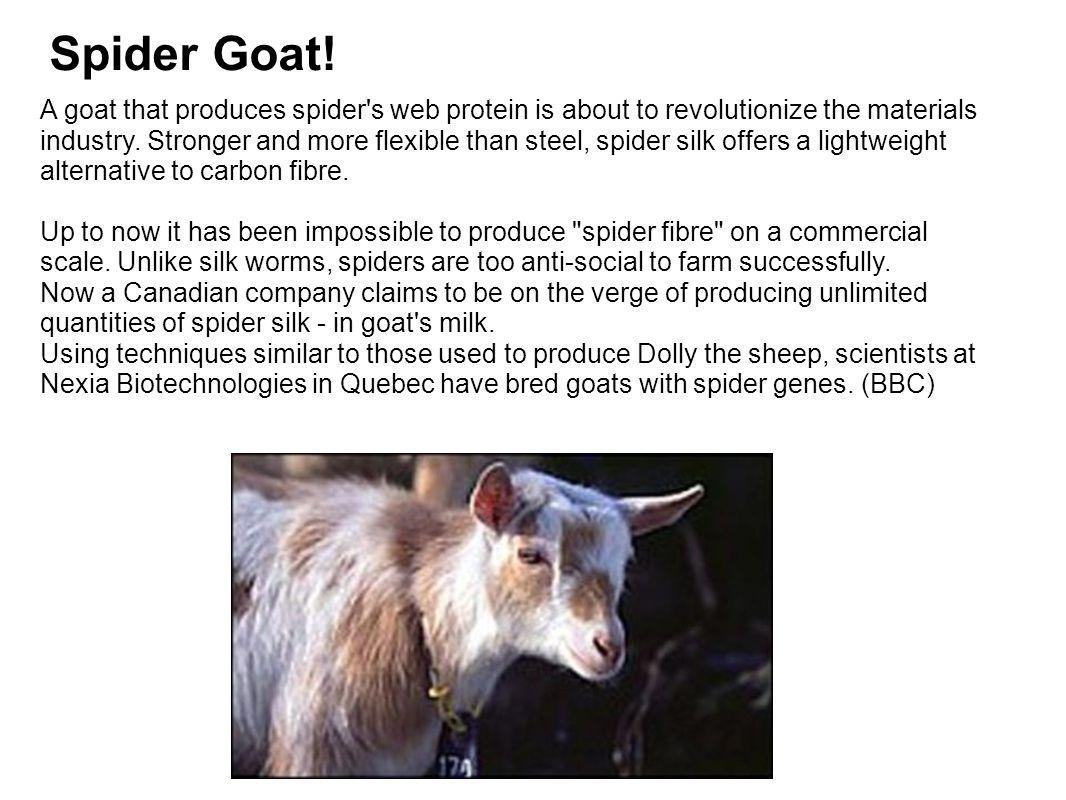 Spider Goat!