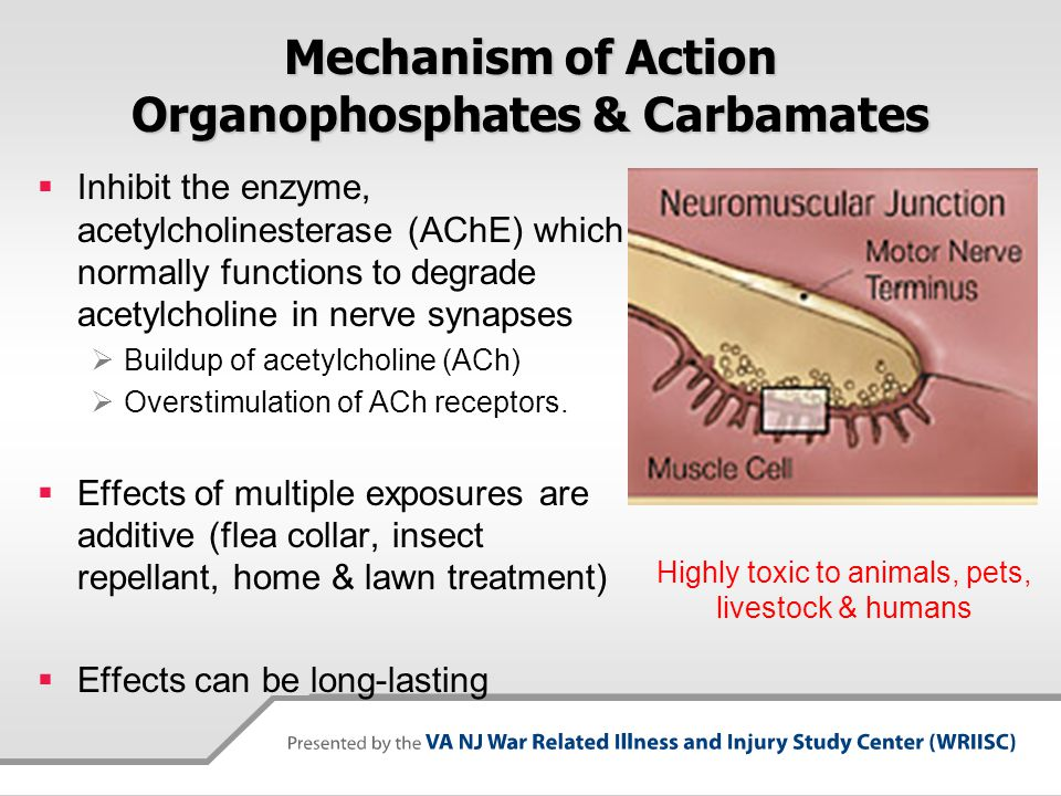 Mechanism of Action Organophosphates & Carbamates