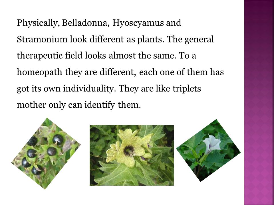 Physically, Belladonna, Hyoscyamus and Stramonium look different as plants.