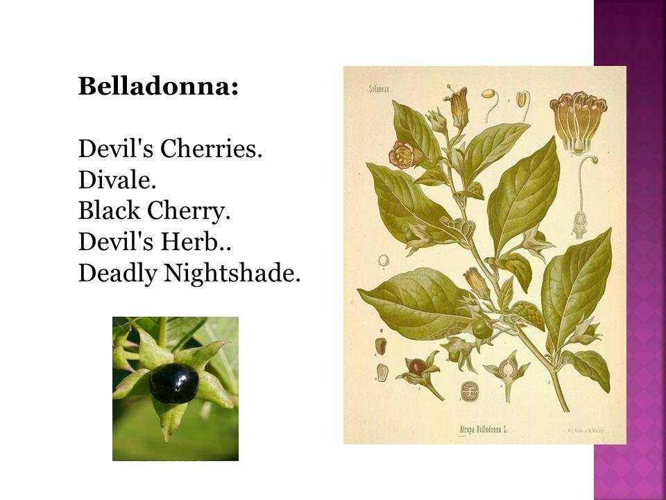 Belladonna: Devil s Cherries. Divale. Black Cherry. Devil s Herb.. Deadly Nightshade.