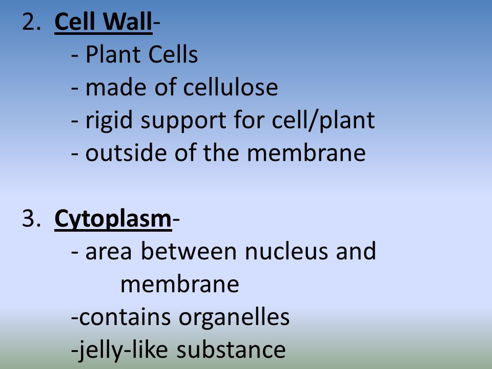 2. Cell Wall-. - Plant Cells. - made of cellulose