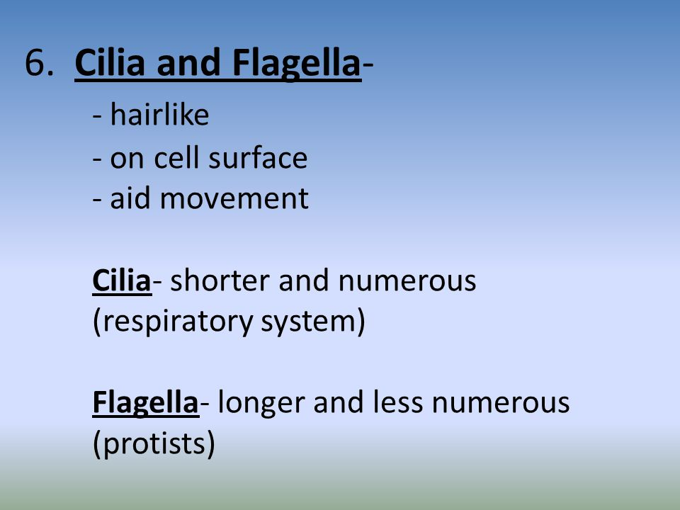 6. Cilia and Flagella-. - hairlike. - on cell surface. - aid movement