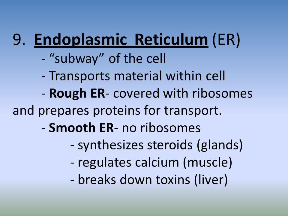 9. Endoplasmic Reticulum (ER). - subway of the cell