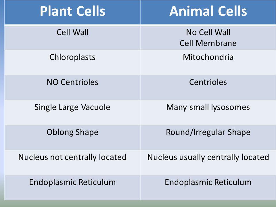 Plant Cells Animal Cells