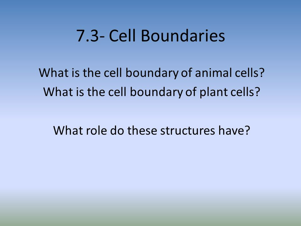 7.3- Cell Boundaries What is the cell boundary of animal cells