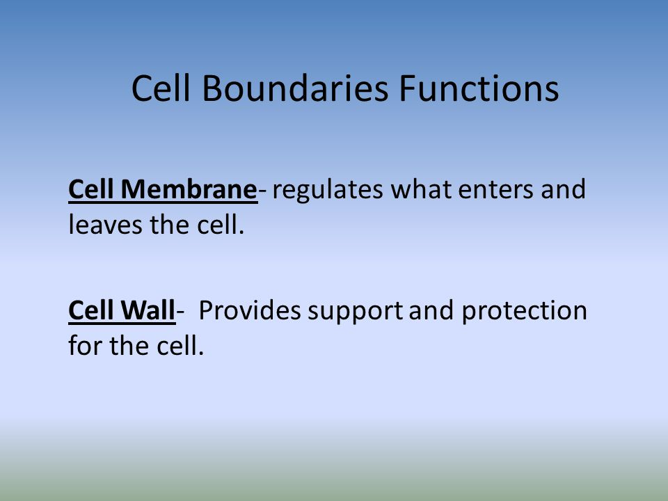 Cell Boundaries Functions