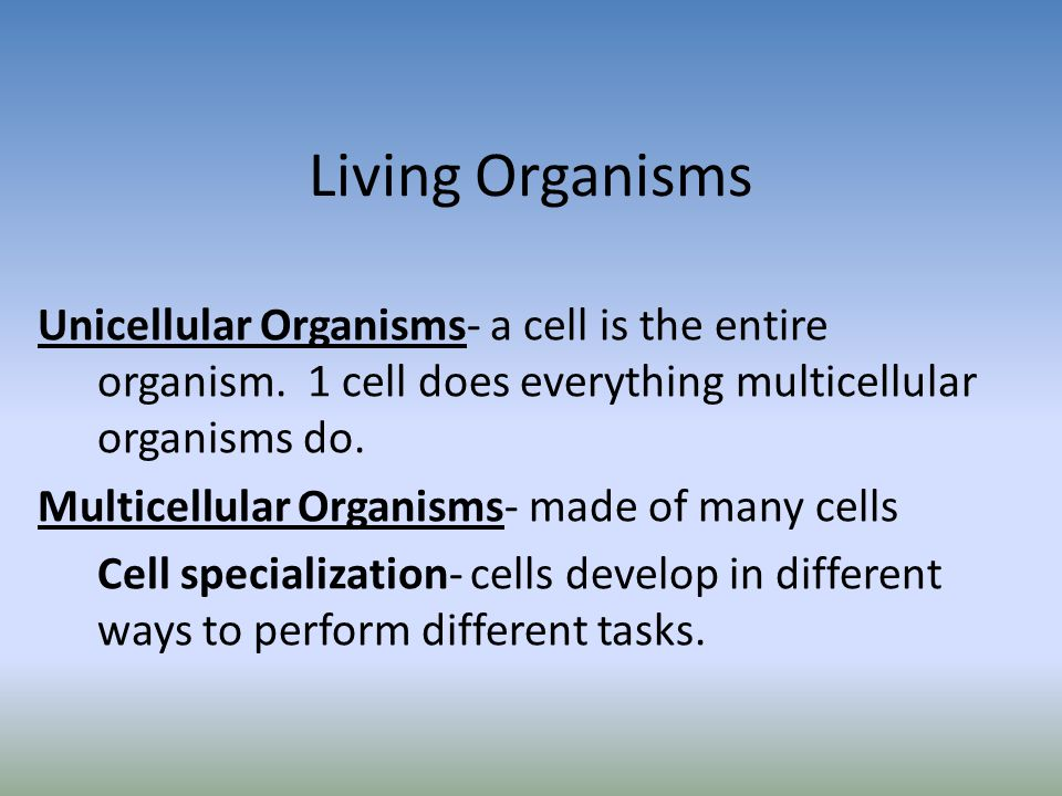 Living Organisms Unicellular Organisms- a cell is the entire organism. 1 cell does everything multicellular organisms do.