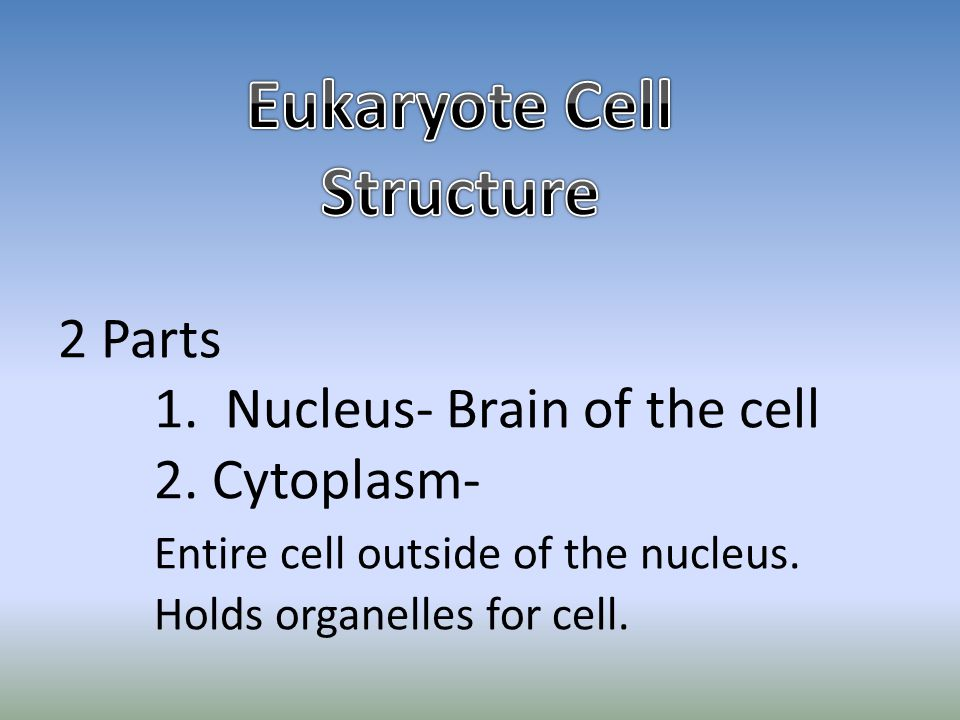 Eukaryote Cell Structure