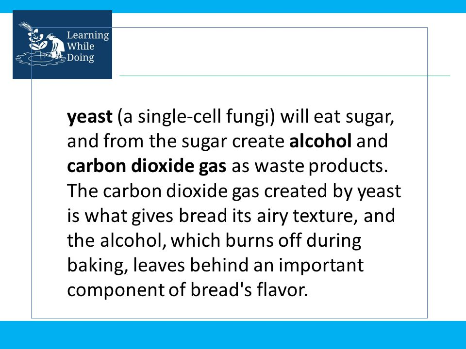 yeast (a single-cell fungi) will eat sugar, and from the sugar create alcohol and carbon dioxide gas as waste products.