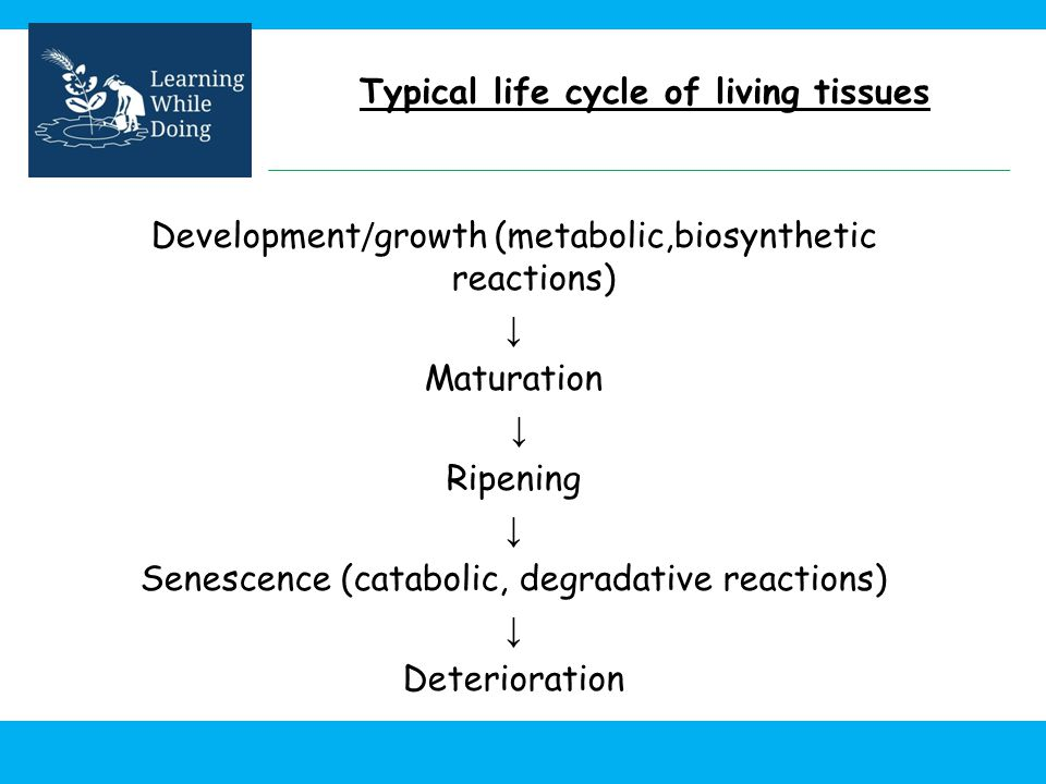Typical life cycle of living tissues
