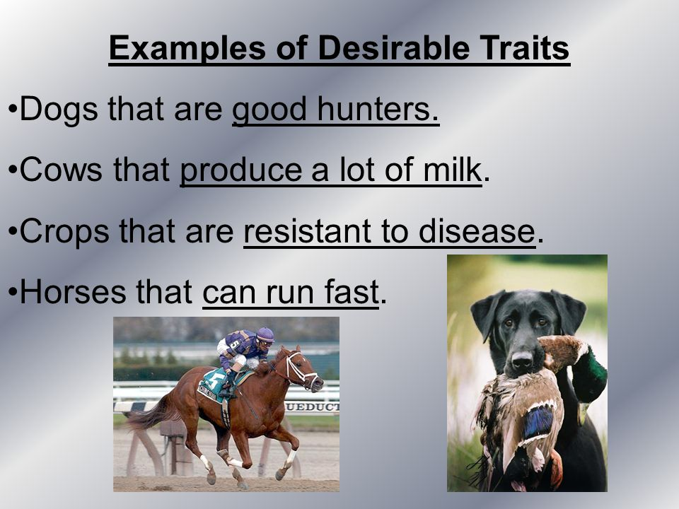 Examples of Desirable Traits