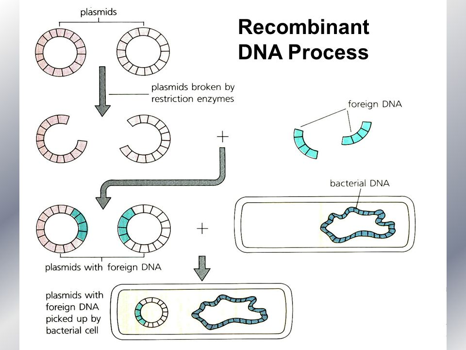 the methods of engineering a plasmid to include a foreign piece of dna Start studying ap bio 18-20 describe how a plasmid can be genetically modified to include a piece of foreign dna foreign dna and plasmid are both cut.