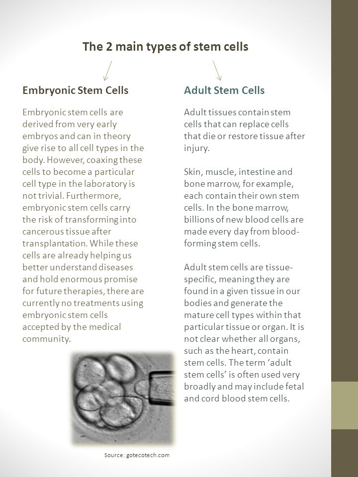 The 2 main types of stem cells