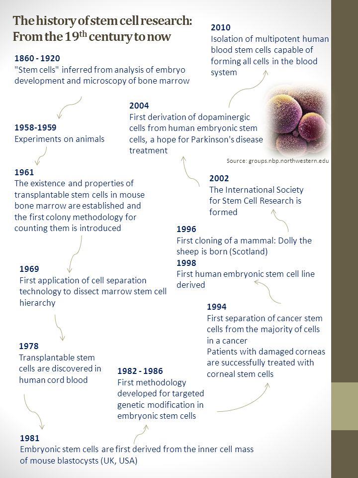 The history of stem cell research: From the 19th century to now